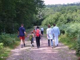Bij genoeg aanmeldingen (tenminste 4) kunnen we mee als gids op diverse wandelingen. Maar u kunt ook zelf geweldig wandelen of het nu door de landerijen of de bossen is.