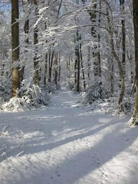 In ieder jaargetijde is het hier prachtig! Vanaf ons terrein loop je zó het 11.000 ha grote Forêt de Tronçais in! Kaarten te leen bij ons of te koop bij de Tourist Information in Cérilly.