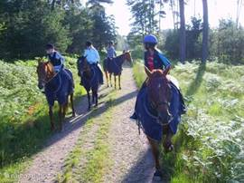 We make daily rides by appointment. We walk with the horses from the estate into the woods.
