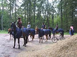 We take only experienced horsemen who have sufficient experience with making rides. The group consists of at most eight riders including the guide.