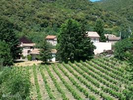 In de directe omgeving het zicht op een naastgelegen wijngaard.
