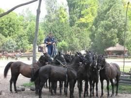 Paardenshows vlakbij