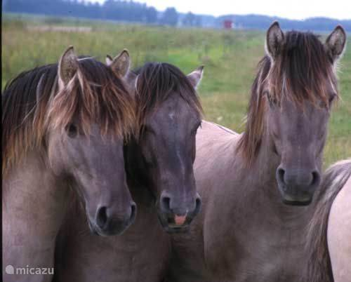 Huisdieren en pony's en paarden
