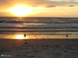 Zonsondergang aan de westkust