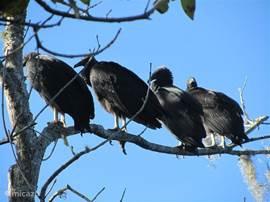 Veel vogels in de wijde omtrek