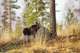 In november in de tuin....meneer eland