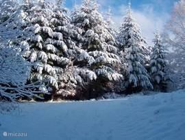 witte bomen in het kellerwald