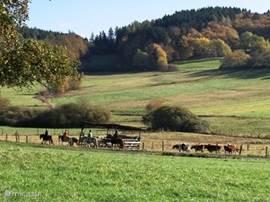 te paard door het Kellerwald