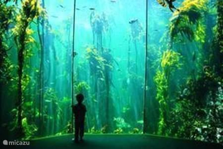 Het Two Oceans Aquarium