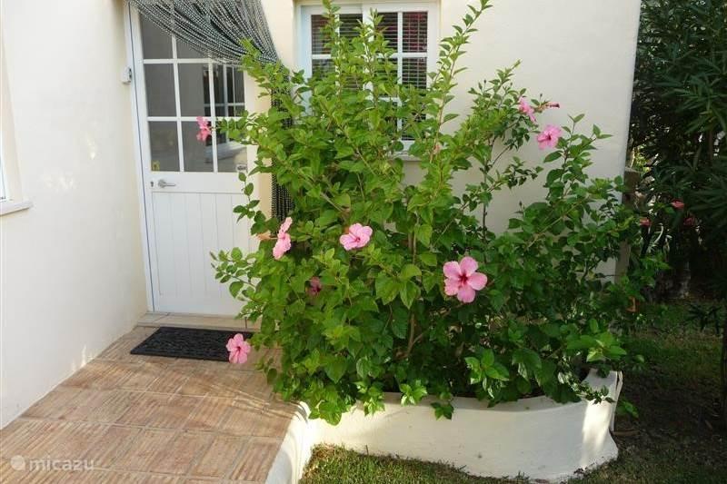 Vakantiehuis Portugal, Algarve, Carvoeiro Villa Vila Pato Feliz