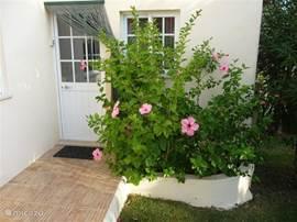 Toegangsdeur met links naast de deur het sleutelkluisje. In de bak prachtig bloeiende hibiscus.