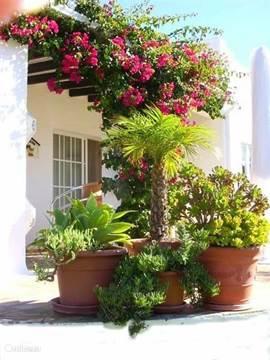 De voorkant van de villa wordt opgevrolijkt door de weelderig bloeiende bougainville en de gezellige grote potten