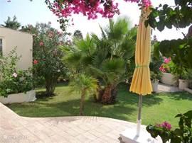 Vanaf het voorterras een kijkje op een gedeelte van de tuin met palm.