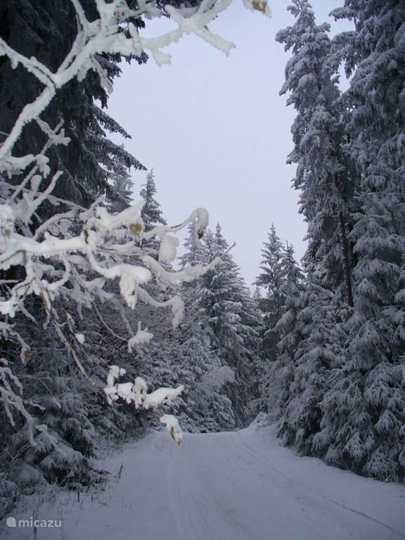 The forests around Villa Lipno in winter atmosphere