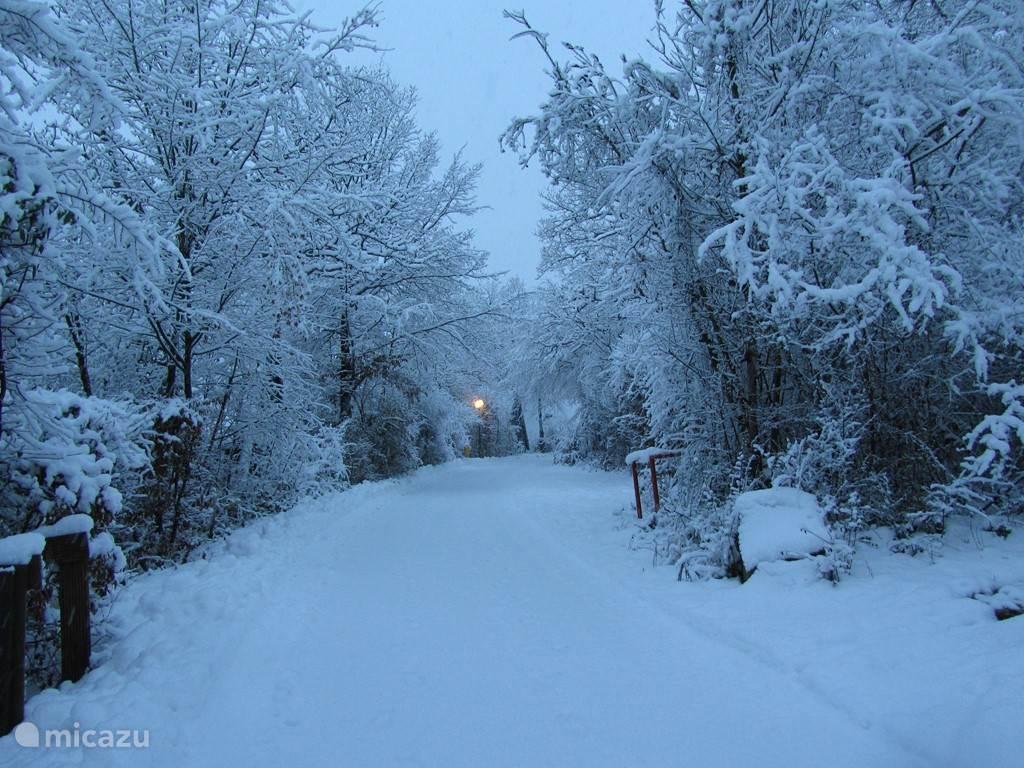 Sneeuw op het park