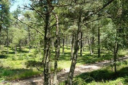 Een bosgedeelte van de holterberg