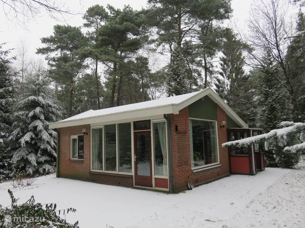 Midden in het bos tussen de eekhoorns en vogels vrije tijd doorbrengen? Wij hebben een vrijstaande, zonnige bungalow te huur met rondom (bos)tuin (ca. 1000m2). In een gebied met alleen particuliere huisjes. Net buiten Holten. Volop fietsen en wandelen.