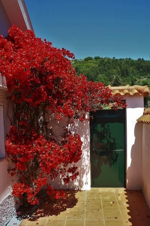 De bougainville aan de voorkant van de woning zorgt maandenlang voor kleur.