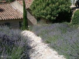 Upon arrival you will be greeted by the Lavender