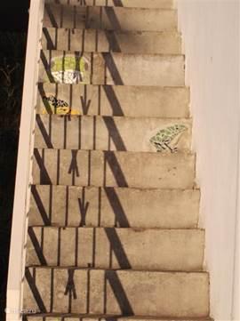 Sprookjesthema: op de trap zijn een aantal kikkertjes gemozaiekt.