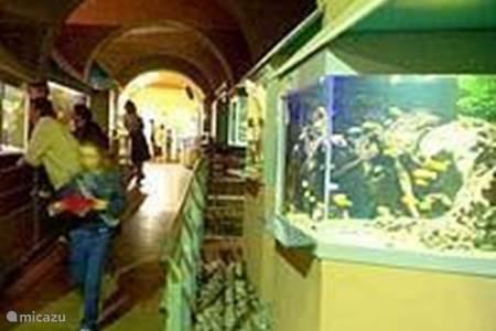Groot aquarium in Limoges
