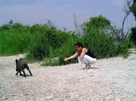 Loes voert de wilde zwijnen in het Millipark (pas op je handen)