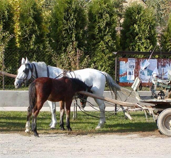 Paardrijden of een tocht met paard en wagen