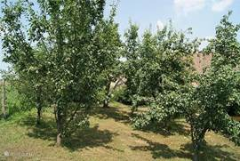 In the upper part of the garden are several fruit trees. The fruit does not always look as pretty as in the stores, but it is untreated, super fresh and really delicious!