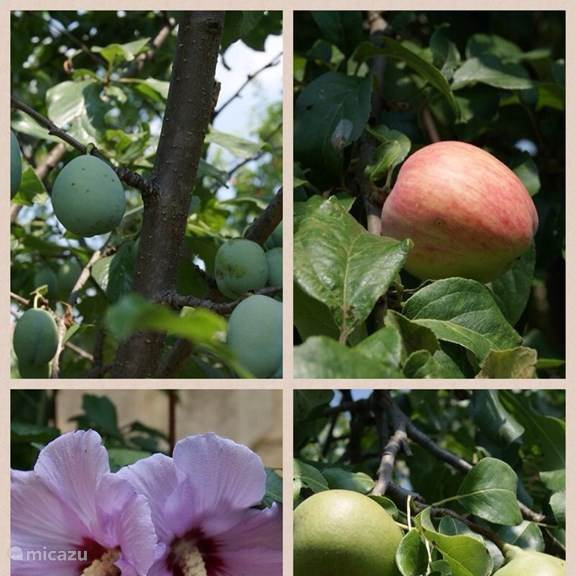 The garden has fruit trees, the fresh fruit in season can therefore be removed from the trees (apple, pear, plum, cherry and walnut)