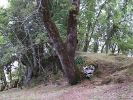 San Rocco, tegenover Sorano, o.a. met verschillende tombes uit de Etruskische tijd.