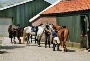 Paard - en ponyrijden