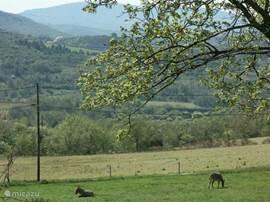 vanaf de veranda gezien ... meer naar het oosten. De ezeltjes die hier lopen te grazen (op ons terrein) lopen hier alleen in het vroege voorjaar.