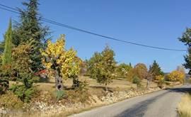 Bij onze uitrit, richting het dorp Mirabel.