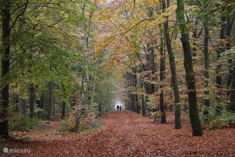Mooie bossen in de omgeving.