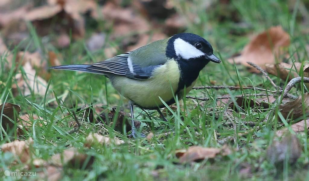 Uiteraard veel vogels in het bos!