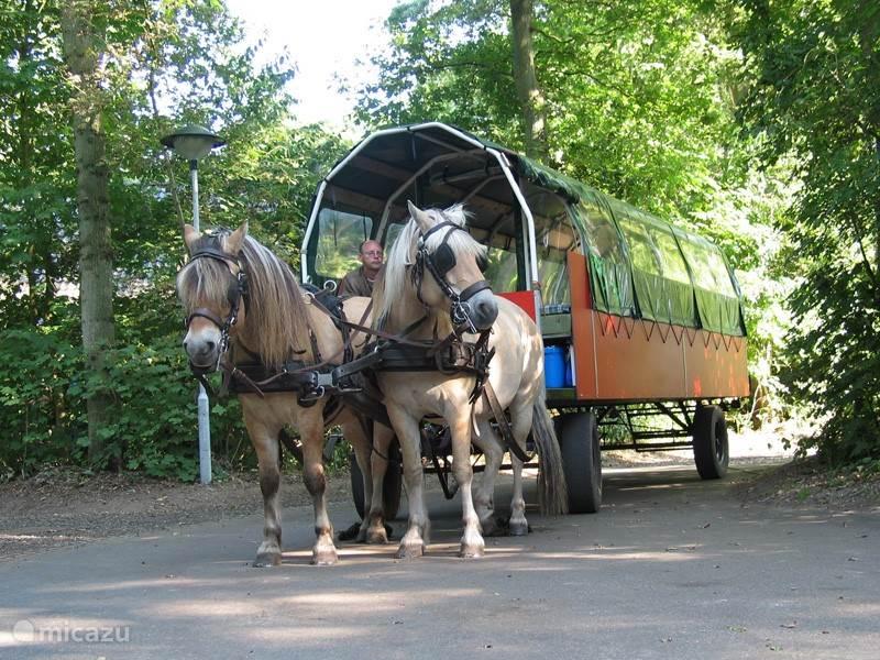 Een ritje met de paardenkar, het kan allemaal!
