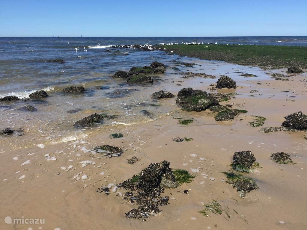 Strand vlakbij Petten