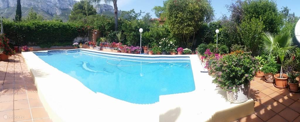 Heerlijk genieten aan het zwembad