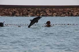 Zwemmen met de Dolfijn