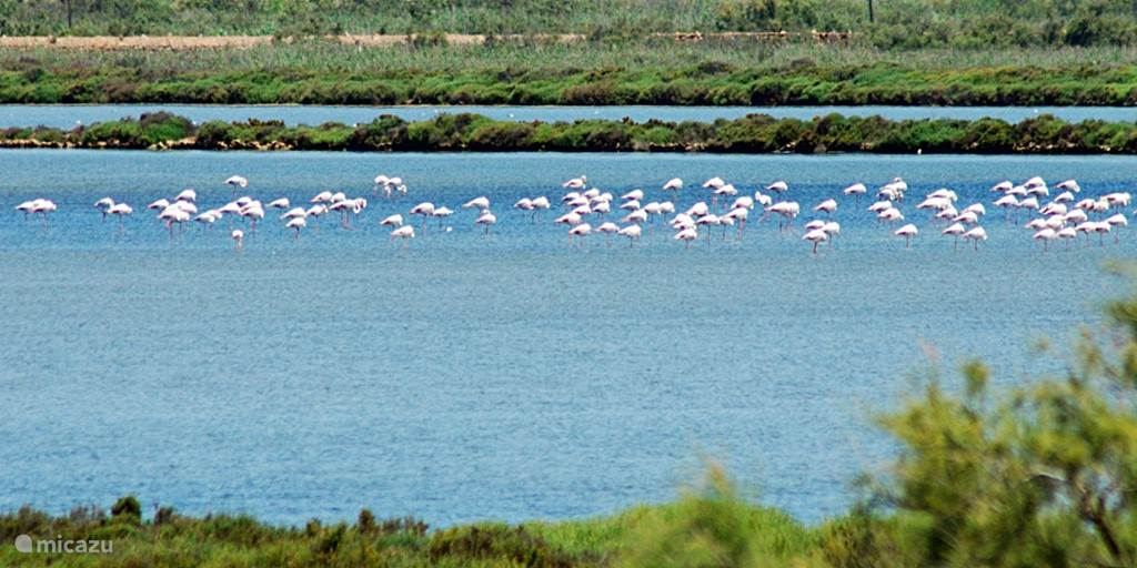 Het Natuurpark vol met beschermde vogel soorten