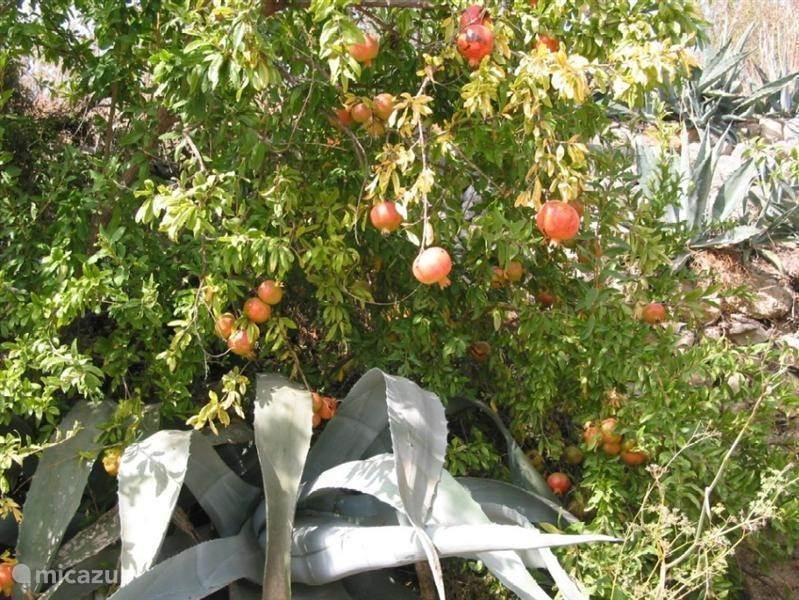 HET WEER in Augustus/September