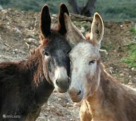 De ezeltjesfarm,ook vlak bij, waar al de verwaarloosde, oude en zieke ezels een goede oude dag krijgen. Daarnaast zit een Duits restaurant met vlees van de barbecue,iets wat niets met deze ezels heeft te maken, en een prachtig uitzicht