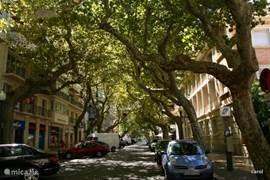 Dit is de hoofdstraat van Denia,de Marques de Campo. Luxe winkels,een super Spaanse sfeer en zalige terrasjes onder statige oude Platanen. Neem  hier uw lunch, tussen twee en vier, bij een van de vele goede restaurants en wacht tot de winkels weer open gaan na de siësta, zo rond vijf uur.