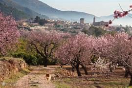 Een wandeling naar een volgend dorp van Parcent naar Alcalali...geen straf.