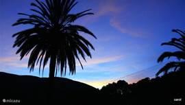 De grote palm in de tuin. Deze is fotogeniek,vooral wanneer de avond valt..of de wolken binnentrekken ( af en toe is er hier ook winter ;-))