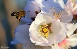 Ik houd van bijtjes...én van honing. Die kunt u hier ook overal kopen. Vers van de bloem...