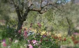 De iristuin een wonder aan bloemen...op een onverwachte locatie, hoog in de bergen, vlak bij het dorp PiñosEind april begin mei gaat deze open. Het Keukenhof van de Costa Blanca, maar vrij onbekend,  en daardoor ook niet zo druk gelukkig