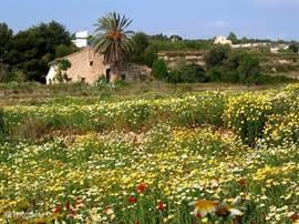 Overal bloeien er trouwens bloemen in het wild tijdens het voorjaar. In Januari/ februari als de winter nog koning is in Nederland  is de overgang naar Spanje enorm.