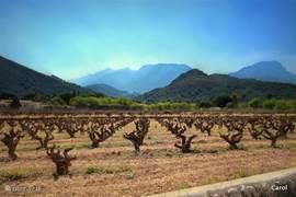 de Jalonvallei is ruim...Agrarisch. Hier verbouwd met de moscatel-druif, goed voor vele de flessen wijn die met dozijnen tegelijk bij de cooperativa van Jalon gekocht worden....Van mierzoet tot de brut Cava ( moscatel) Vier-fasen-jaargetijden, ook hier. Kale druivenranken, vol blad, druif en kleur