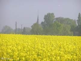 Saint Aubin ontwaakt. Prachtige gele koolzaadvelden in de directe omgeving van uw vakantiehuis met op de achtergrond het kerktorentje van het dorp.